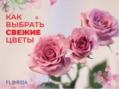 Заметки флориста: как выбрать свежие цветы